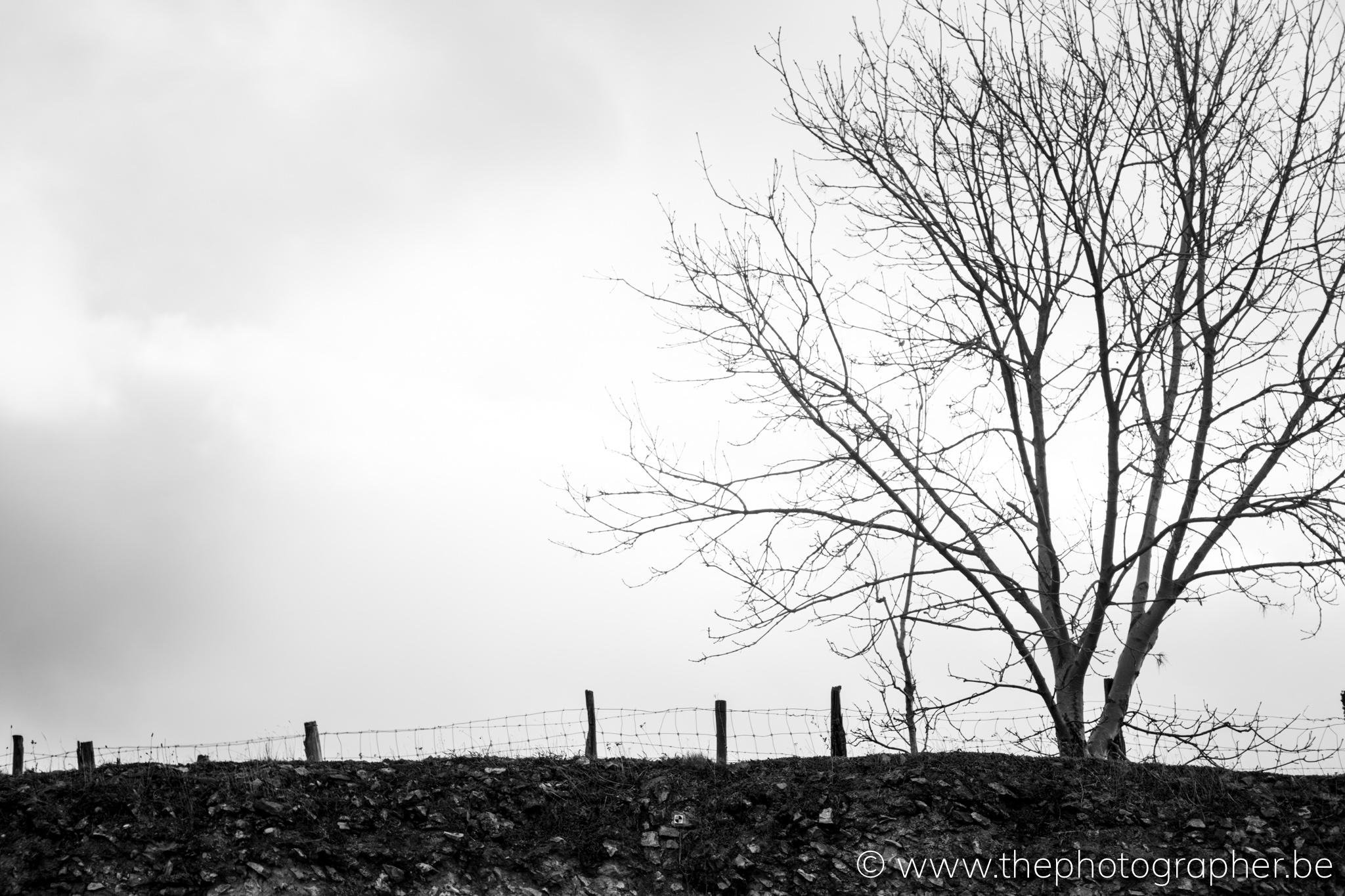 Een boom op de heuvel in de velden