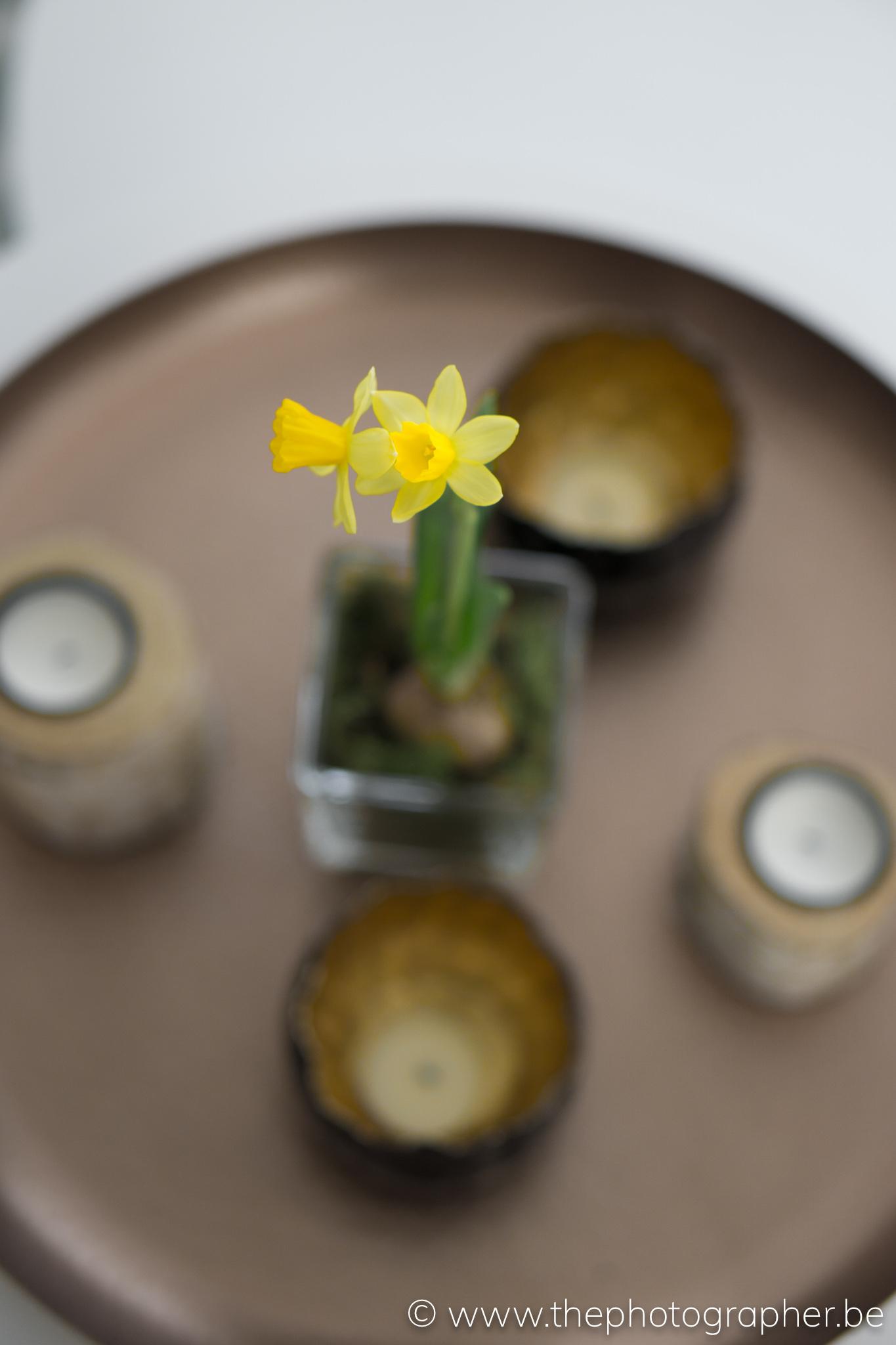 Een eenvoudige maar prachtige bloem