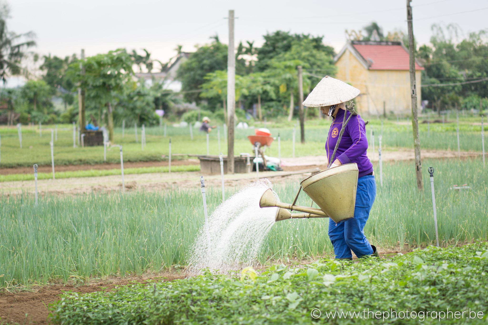 Werken op de velden van Vietnam