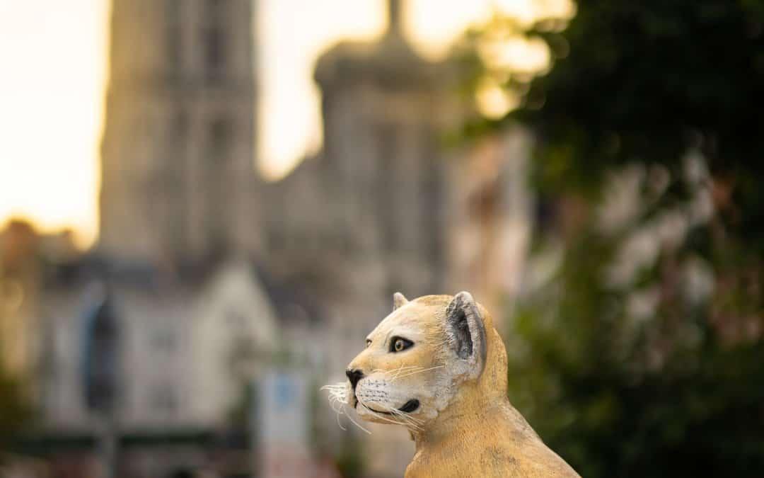 Een klein luipaard in hartje Antwerpen